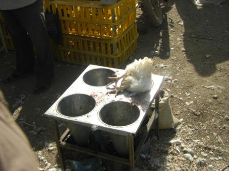 خرید و فروش مرغ زنده در آذربایجان غربی ممنوع شد