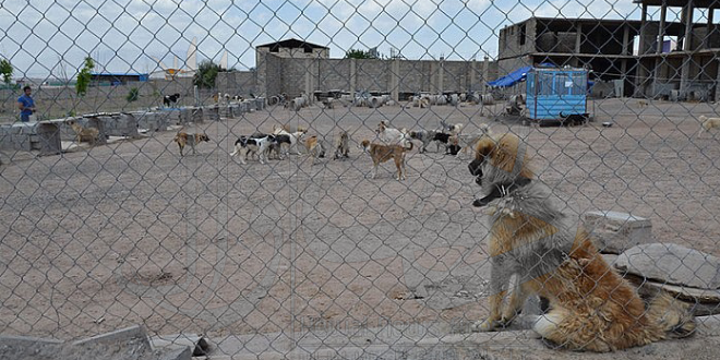 حیوان آزاری، خلا قانونی یا سکوت کر کننده جامعه؟