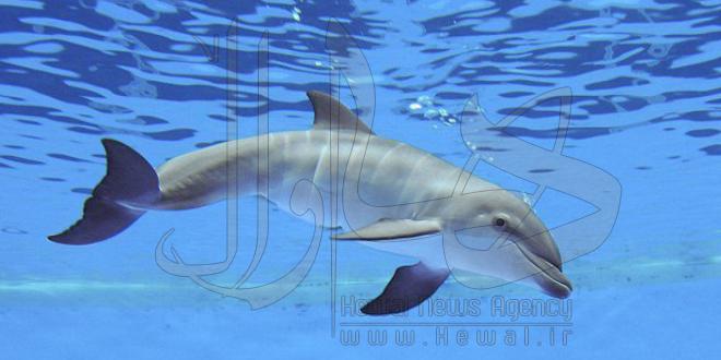 دلفین هایی که در سیل خروشان مردم مهاباد غرق شدند