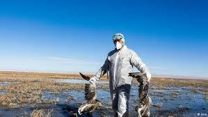 اداره دامپزشکی مهاباد: موردی از آنفولانزای پرندگان در مهاباد مشاهده نشده است